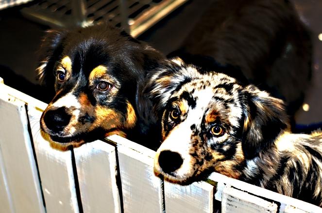 my-dog-redigerade-16posterized