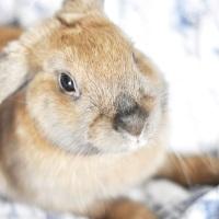 Vår Lilla Kanin...